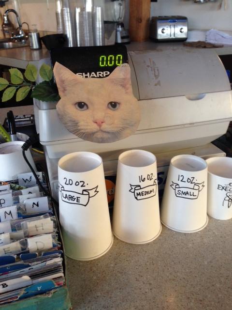 judgey cat PBE